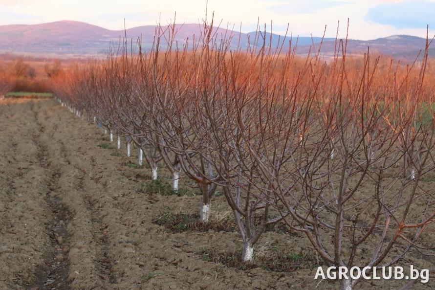 """От днес Държавен фонд """"Земеделие"""" започва прием на заявления по схемата """"Помощ за компенсиране разходите на земеделски стопани, свързани с изпълнение на..."""