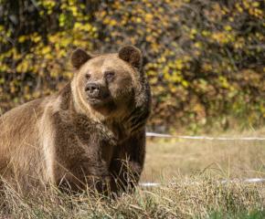 Паркът в Белица спаси поредния мечок, който вече живее в отлични условия
