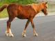Петима в болница след катастрофа с кон