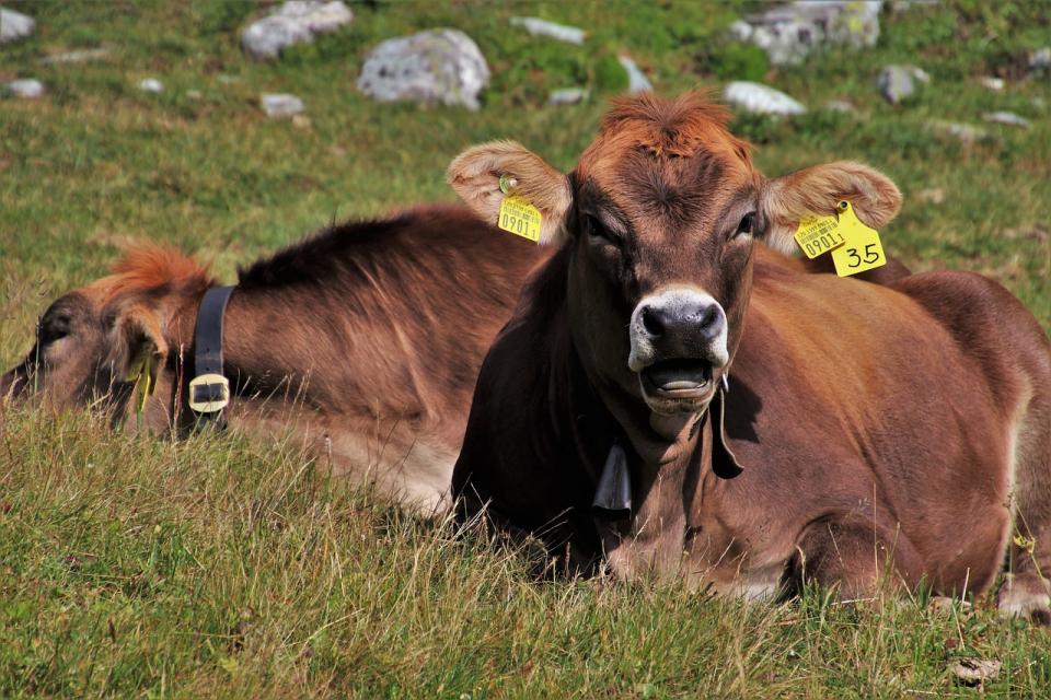Над 1000 заявления са подадени в първия ден от приема по мярката за подпомагане на земеделските стопани и малки и средни предприятия, засегнати от ковид...