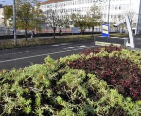 Покриват със зеленина спирки в Бургас