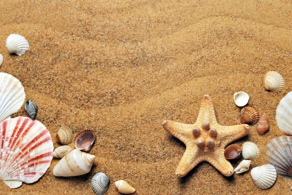 Проверка, възложена от Върховната административна прокуратурата, е открила поредни нарушения, свързани с ограничаване на достъп до морските плажове, съобщава...