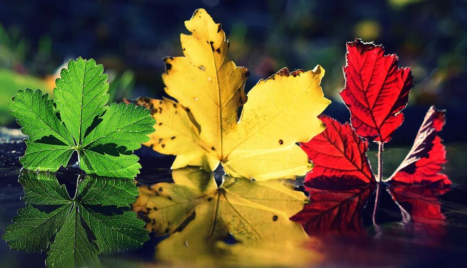 Слънчево с южен вятър ще е времето в последния ден на лятото. Максималните температури ще са между 21 и 26 градуса. Астрономическата есен настъпва утре...