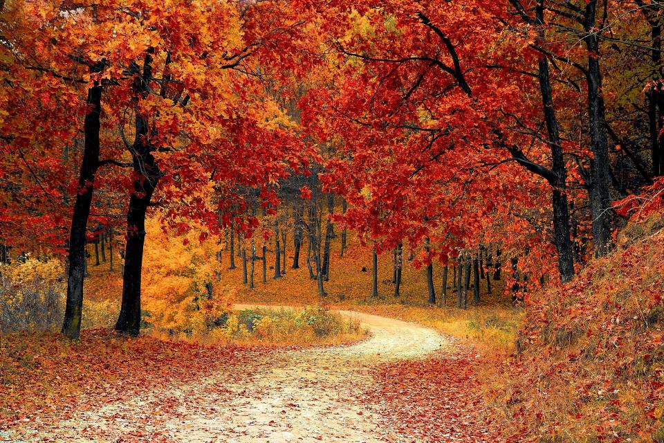 В 22 ч. и 21 минути днес, 22 септември, настъпва есенното равноденствие. Тогава започва и астрономическата есен. Есента е един от четирите сезона в умерения...