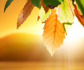 Посрещаме есента със слънце