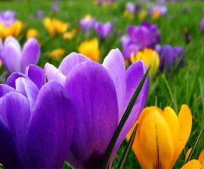 Посрещаме пролетта на 20 март в 5.50 ч. българско време