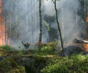 Повишен риск от пожари в Ямболско и Сливенско