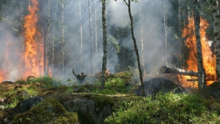 Повишен остава рискът от пожари в областите Ямбол и Сливен. От Регионална дирекция по горите предупреждават, че ситуацията ще се усложни след откриването...