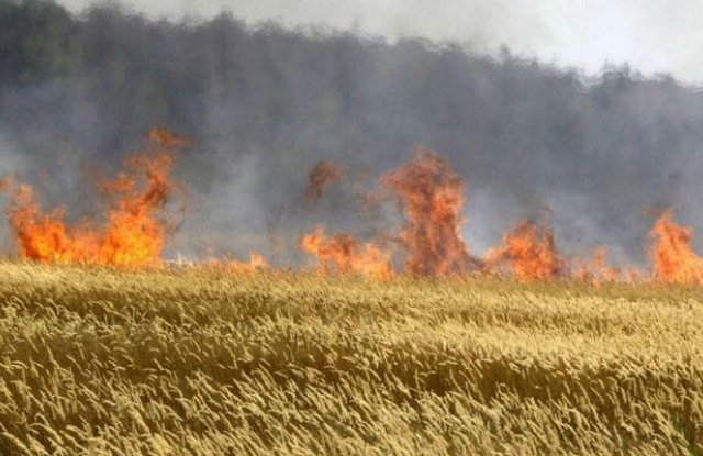 40 декара от пшеничен блок бяха изпепелени в събота при пожар в землището на елховското село Гранитово. Сигналът е получен в оперативния център на Регионалната...