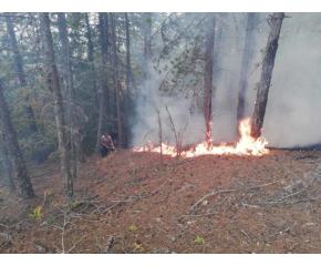 Пожар край Твърдица. Поискан е вертолет от Министерството на отбраната за овладяването му