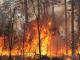 Пожарите в Ямболска област зачестяват.
