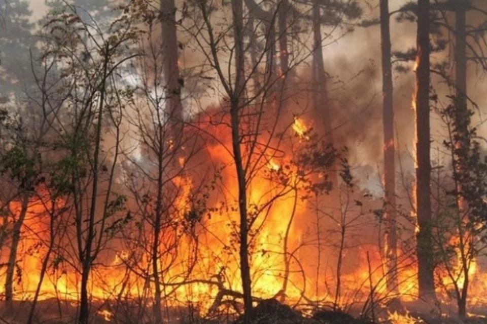 Зачестяват пожарите в равнинната част на Ямболска област. Изоставените къщи и дворни места с висока растителност са основният риск за възникване на огнища...