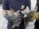 Пожарникари от Силистра спасиха котенца от удавяне