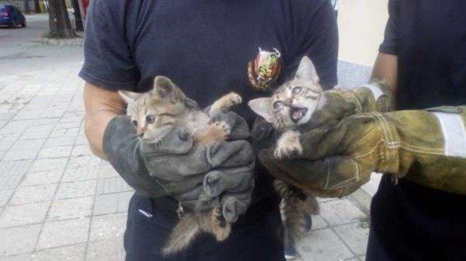 Пожарникарите в Силистра са се притекли на помощ и са спасили от удавяне котенца, съобщават от Областната дирекция на МВР. Животните са попаднали с своеобразен...