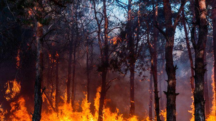 100 декара иглолистна гора са спасени от екипи на РСПБЗН-Сливен, горски служители и доброволци. Пожарът е възникнал след запалване на паднала листна маса...