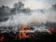 Пожарът край село Брягово е овладян