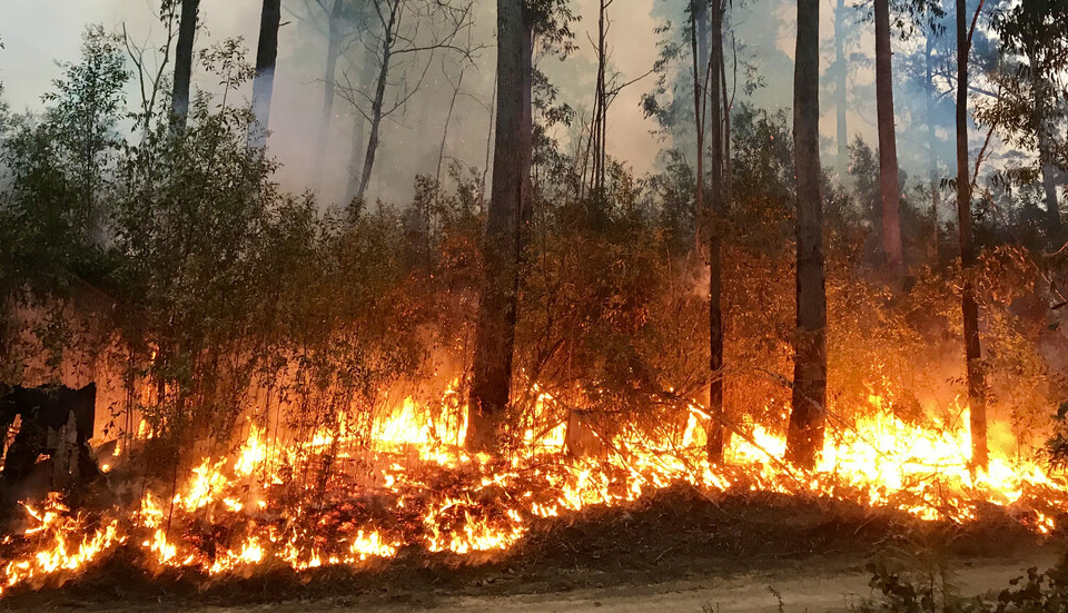 Големият пожар в Сакар, обхванал 2000 декара горски масиви, все още не е локализиран. Пожарът е възникнал в сряда около 17.00 часа в района на селата Студена...