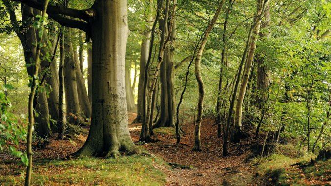 Парламентарната комисия по земеделие ще разгледа предложението за въвеждане на двугодишен мораториум върху сечта на вековни гори, предават от БНР. Днес...
