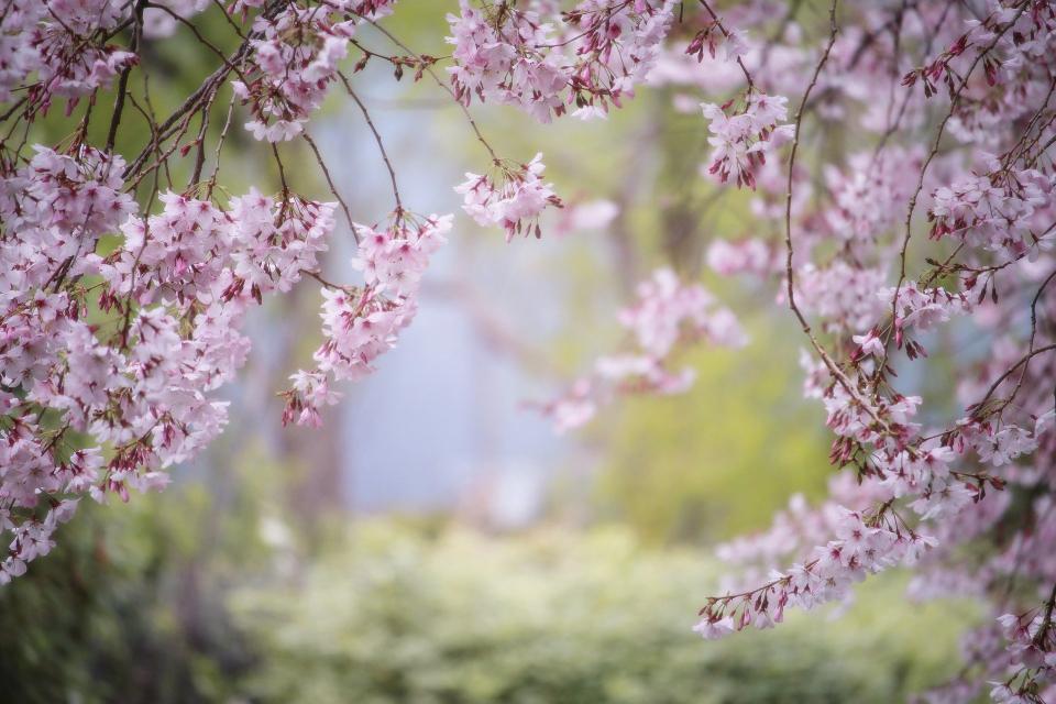 Община Сливен уведомява собствениците на пчелни семейства, че на 29 март от 6 до 10 часа ще бъде извършено третиранe срещу сачмянка и ранно кафяво гниене...