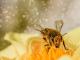 Предупреждават пчеларите за планирано пръскане