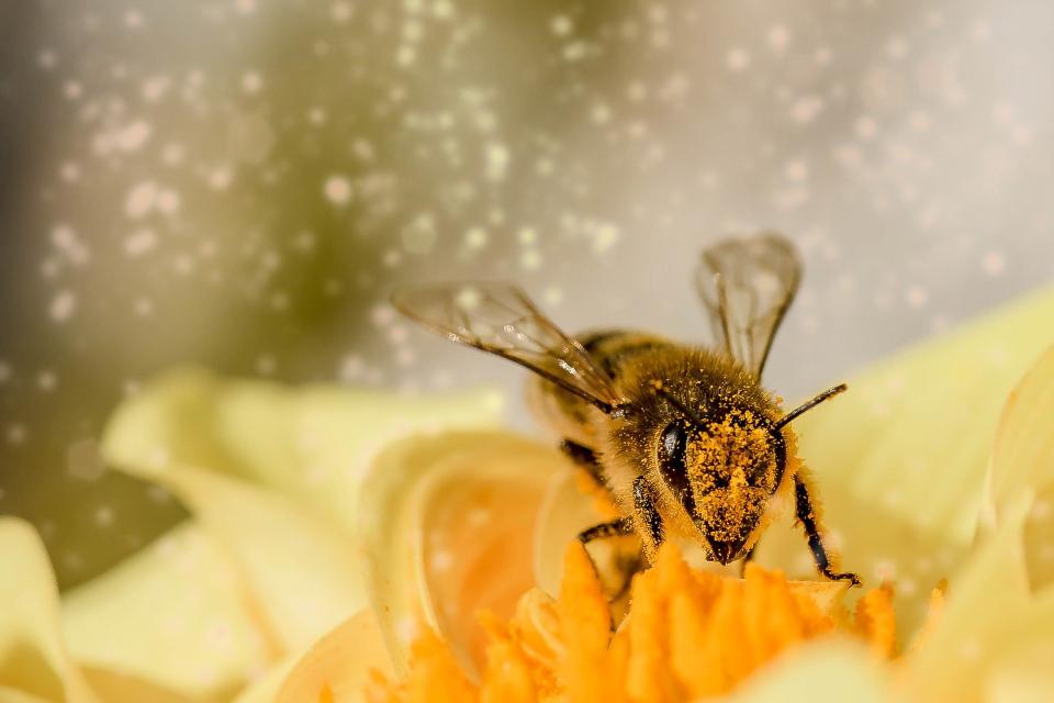 """Железопътна секция Бургас съобщава, че ще извърши растително-защитни дейности в изпълнение на Наредба № 13 от 2016г. за """"Мерките за опазването на пчелите..."""