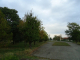 Премахват сухи и опасни дървета в Южен парк-Стралджа