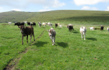 Превеждат субсидиите на фермерите