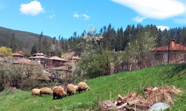 Близо 100 000 българи са напуснали градските си жилища през миналата година, за да се преместят да живеят на село. Това е повече от населението на град...