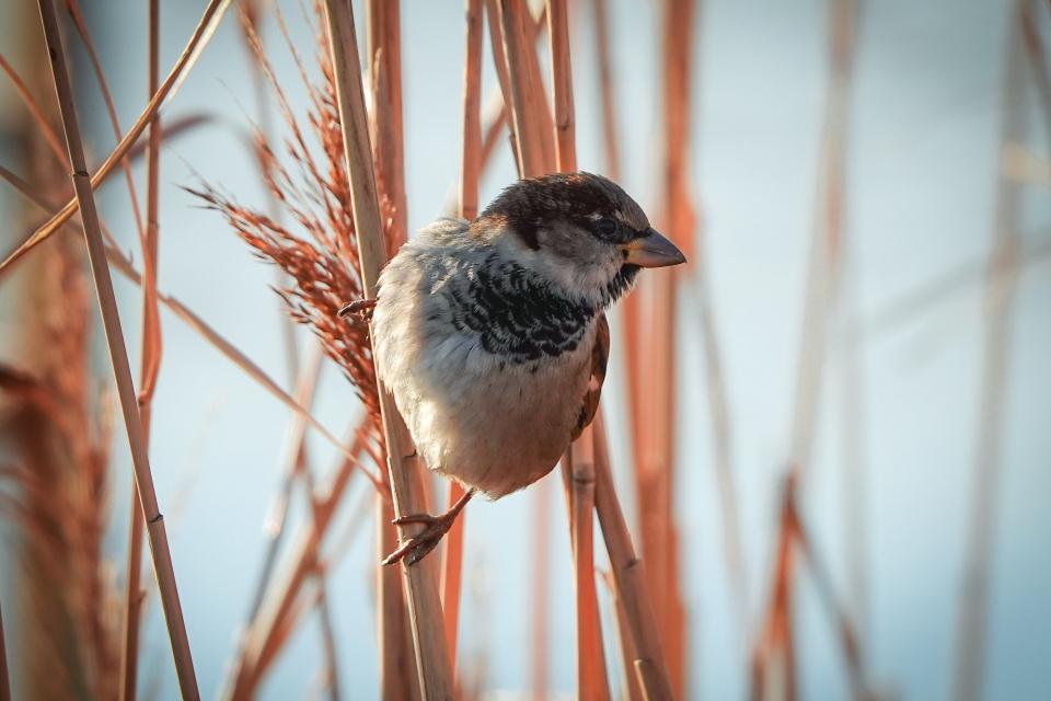 """Рекорден брой участници се включиха в петото издание на инициативата на Българското дружество за защита на птиците """"Ние брим врабчетата"""". Кампанията се..."""
