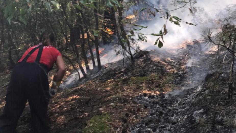 В три района са съсредоточени усилията за овладяване на горския пожар в района на Югово и Нареченски бани в Родопите, предават от БНР. Огнищата са отдалечени...