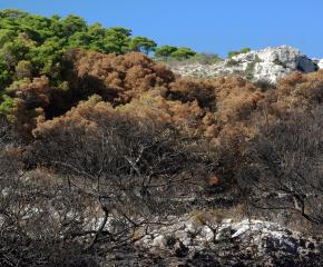 Продължава борбата с горския пожар над село Югово
