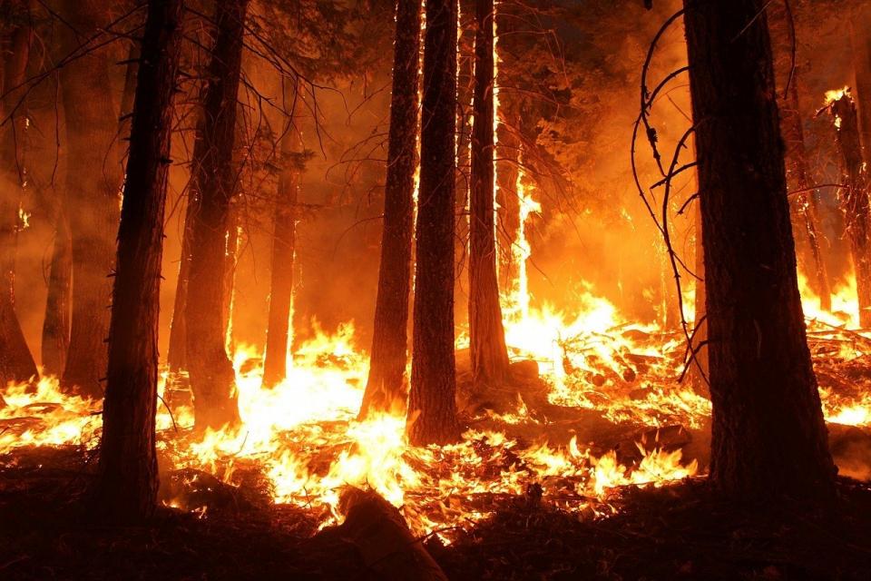 Вече второ денонощие продължава борбата за овладяване на пожара в Сливенско, съобщи БНТ. В следобедните часове вчера заради силния вятър са се разгорели...