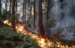 Продължава гасенето на пожара в хасковското село Брягово