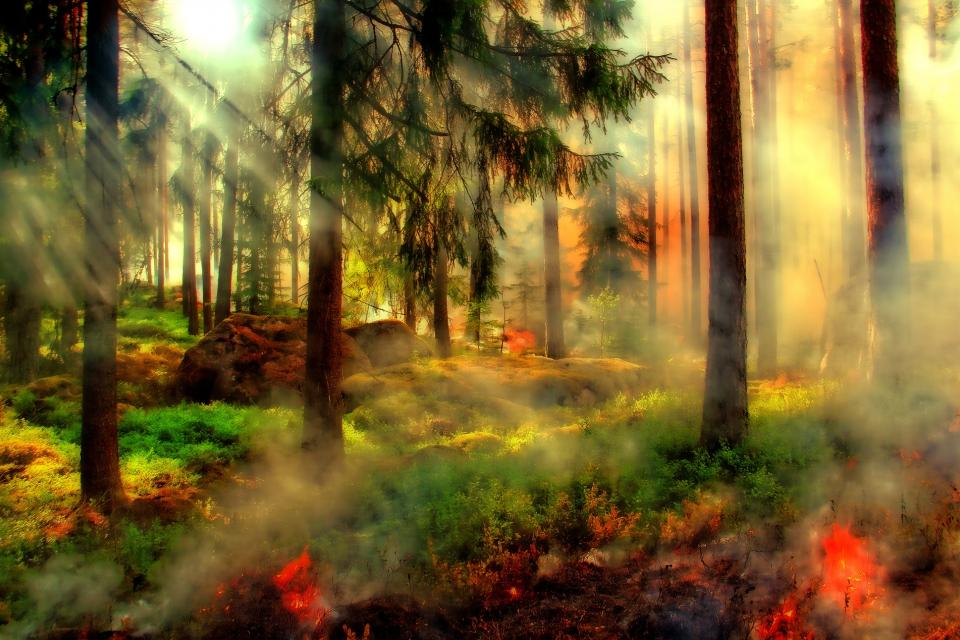 Огънят, който от два дни бушува край ямболското село Лесово, късно снощи е прехвърлил река Тунджа и е достигнал до село Присадец, община Тополовград. Жителите...