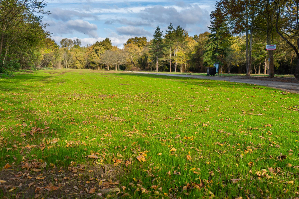 Община Ямбол продължава грижите а обособените зелени площи и зони за отдих и спорт. Амбицията на общината е те да се увеличават, но за това разчитат и...