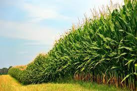 Проектът за охрана на земеделската продукция в населените места продължава