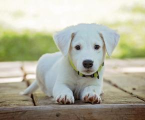 Процентът на осиновени кучета е най-голям в Бургас