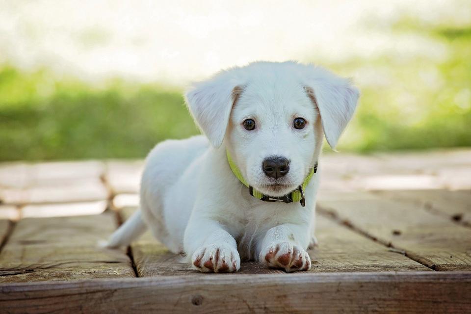 Най-голям е процентът на осиновените кучета в Бургас. Това сочат данните, включени в Отчета за изпълнение на Националната програма за овладяване популацията...