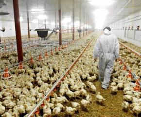 Проверяват всички птицеферми заради птичи грип
