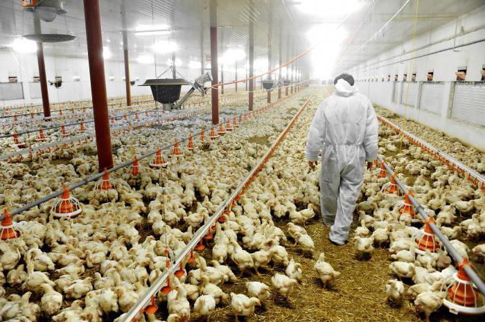 Българската агенция за безопасност на храните започва масови проверки във всички птицеферми заради птичи грип. Предстоящият зимен сезон е рисков за птиците...