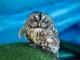 Птици, пострадали от жегите, са спасени от служители на природния парк в Сливен