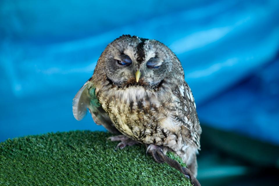"""Птици, пострадали от жегите, са спасени от служители на природния парк """"Сините камъни"""" в Сливен, съобщиха от Парка.Бял щъркел и кукумявка са били транспортирани..."""
