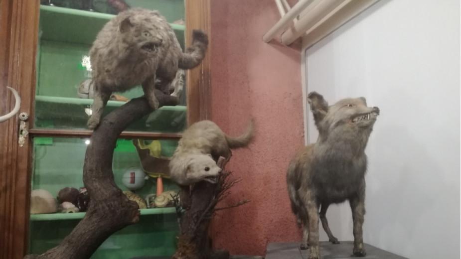 Експерти от Националния природонаучен музей при Българската академия на науките ще реставрират препарираните животни от колекцията на Хуманитарната гимназия...