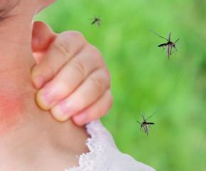 РЗИ-Ямбол предупреждава за Западнонилската треска