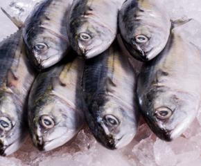 Само до 5 килограма риба ще можем да купуваме директно от рибарите