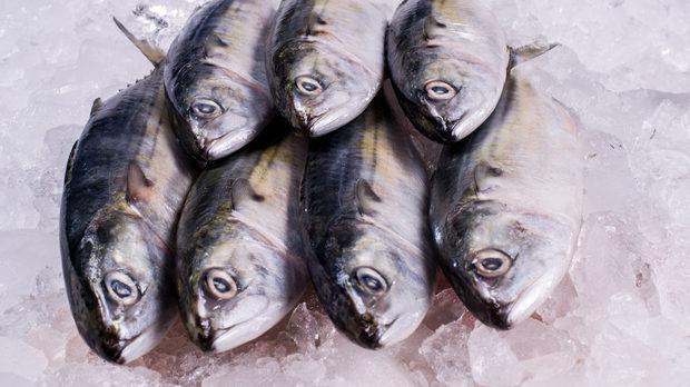 Потребителите ще могат да купуват не повече от 5 кг риба за собствена консумация директно от рибарите на брега, съобщава БНР. За по-големи количества...