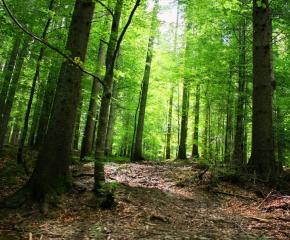 Сериозен интерес от страна на държавата относно закупуването на частни гори