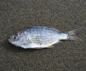 Ще бъде извършена проверка поради мъртвата риба в река Тунджа