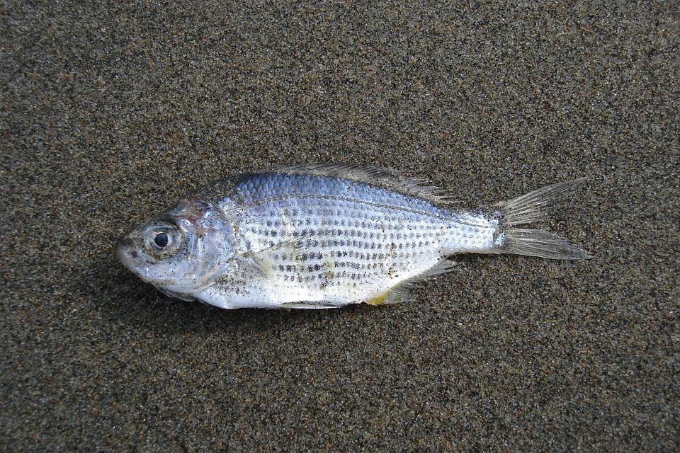Районна прокуратура – Ямбол се самосезира по материали в медиите, съдържащи данни за наличие на мъртва риба в района на напоително съоръжение в село Трънково,...