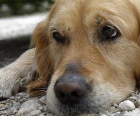 Сигнал за тормоз над кучета, държани гладни и затворени целодневно в апартамент